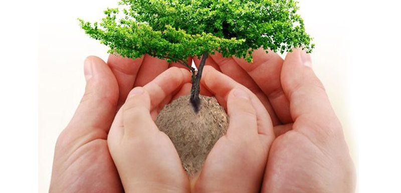 من يعرف قانون الشجرة لتربية الابناء