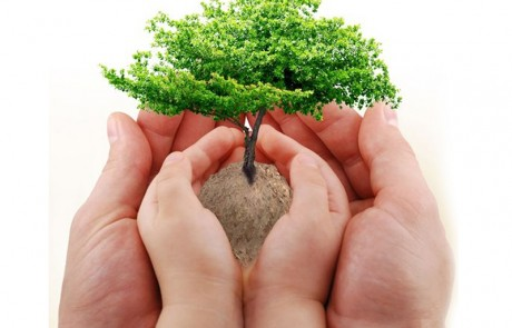 من يعرف قانون الشجرة لتربية الأبناء
